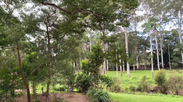 vídeos y material grabado en eventos de stock de tobogán parque infantil en la reserva natural - the nature conservancy