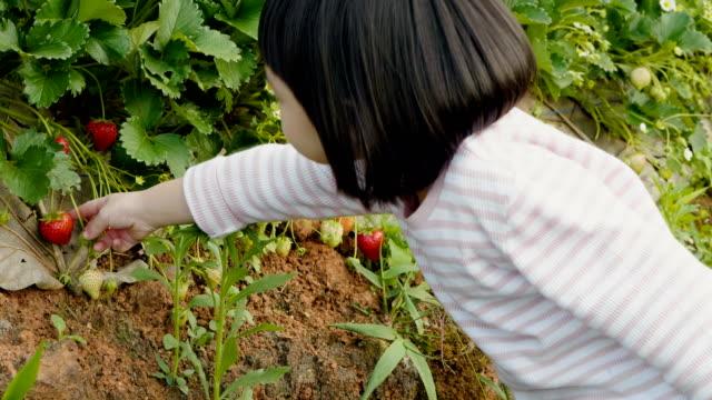 遊んで、庭でイチゴを摘んでします。 - harvesting点の映像素材/bロール