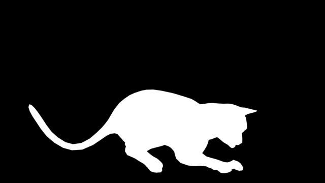 vídeos y material grabado en eventos de stock de jugar al gato (en bucle) - pata com garras