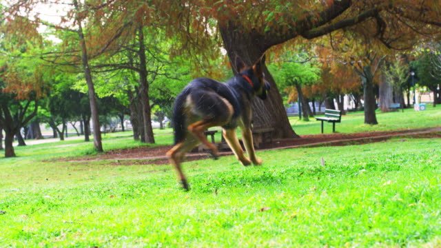 playing catch is his favorite thing to do - loyalty stock videos & royalty-free footage