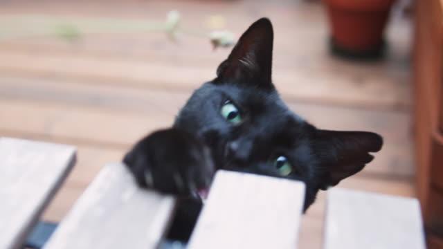 playing funny blackcat outdoor. - 隠れる点の映像素材/bロール