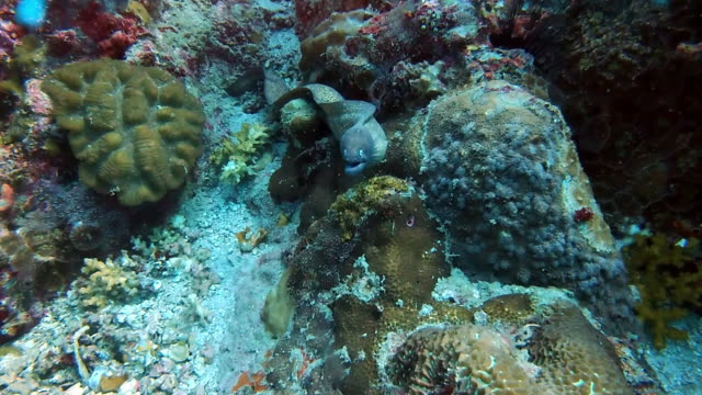 playing hide and seek with the eels - cape coral stock videos & royalty-free footage