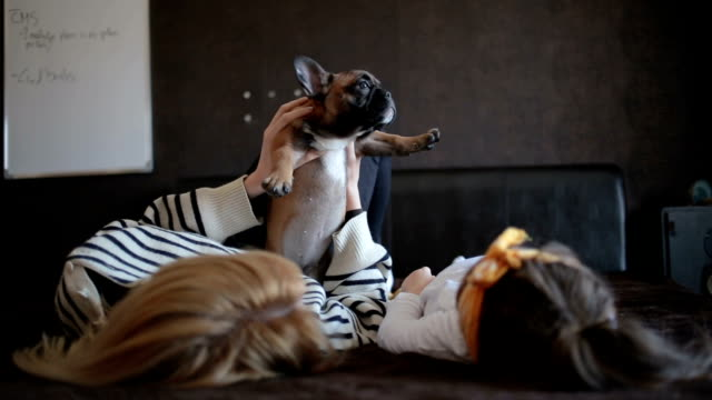 playing in bed with a puppy - french bulldog stock videos and b-roll footage