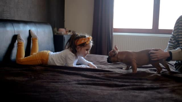 vídeos de stock, filmes e b-roll de jogando na cama com o cão - família do cão