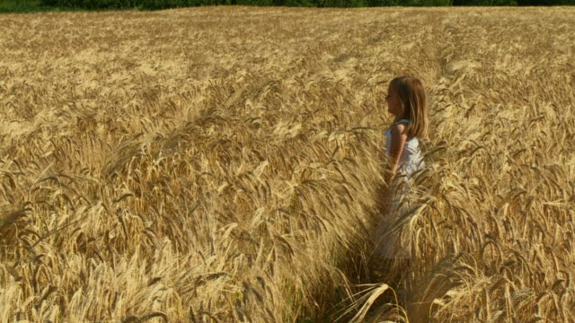 hd slow-motion: playing in wheat - hide and seek stock videos & royalty-free footage