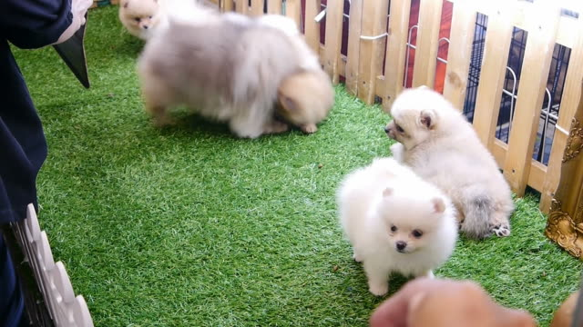 Playing puppies.