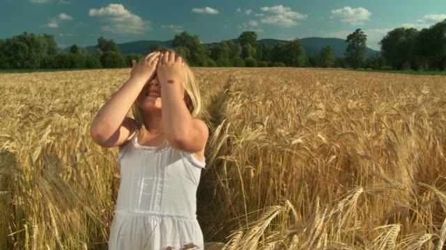 vídeos de stock, filmes e b-roll de grou hd: brincadeira de pegar em trigo - brincadeira de pegar