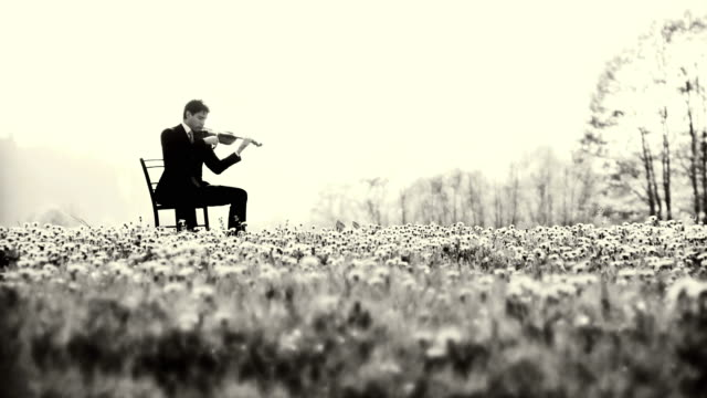 hd: playing the violin in nature - flowerbed stock videos & royalty-free footage