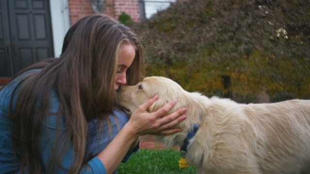 playing with a puppy - golden retriever stock videos and b-roll footage