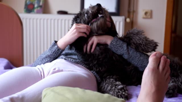 stockvideo's en b-roll-footage met spelen met schattige puppy - bijten