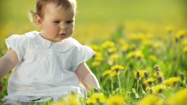 hd: playing with dandelions - one baby girl only stock videos & royalty-free footage