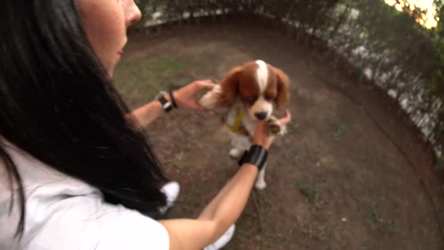 playing with my dog - cavalier king charles spaniel stock videos and b-roll footage