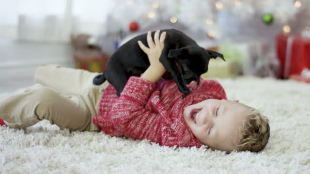 playing with new puppy - pets stock videos & royalty-free footage