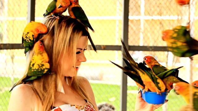 vídeos de stock e filmes b-roll de brincando com papagaio - jardim zoológico