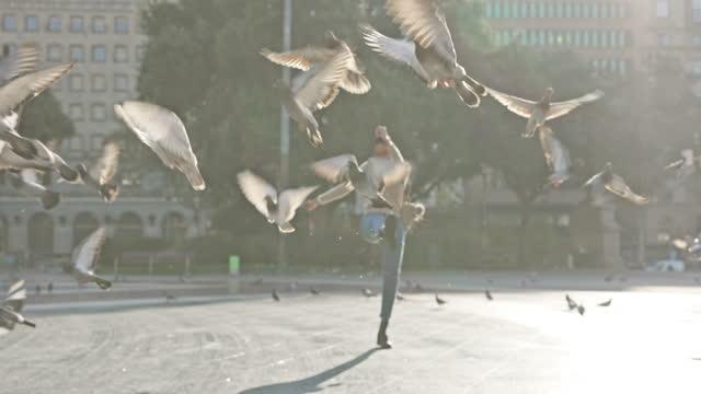 vídeos y material grabado en eventos de stock de jugando con los pájaros - colonia grupo de animales