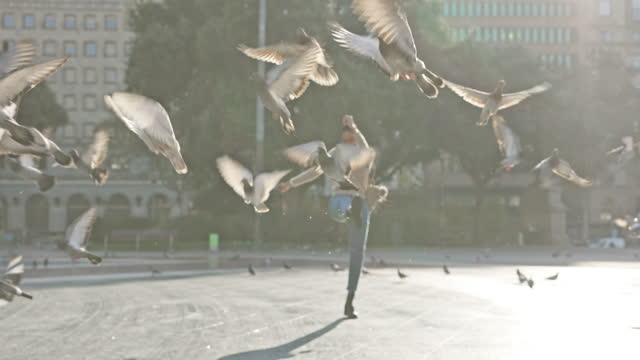 vídeos de stock e filmes b-roll de playing with the birds - beautiful woman