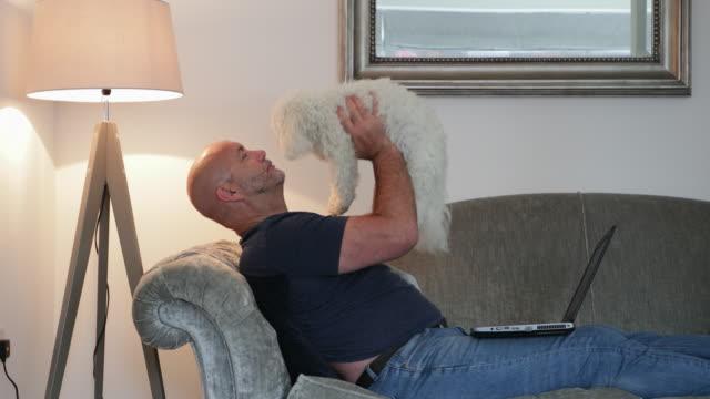 vídeos de stock, filmes e b-roll de playtime com pup! - pet clothing