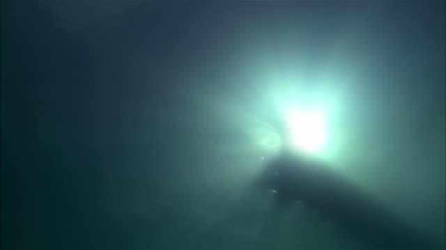 stockvideo's en b-roll-footage met a pleisiosaur swims in silhouette and attacks its prey. - dinosaurus