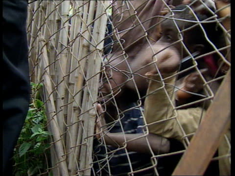 vidéos et rushes de plight of orphans ms small package of protein biscuits handed out over wire fence to clambering orphans cms wire fence with young boy behind crying... - orphelin