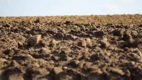 vídeos y material grabado en eventos de stock de desarrollemos en campo - campo arado