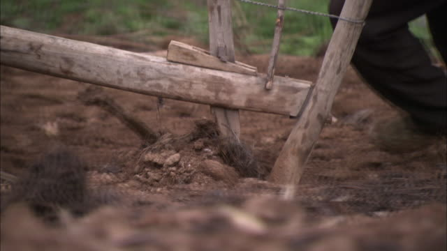 a plow pulled by oxen plows a field. - plowed field stock videos and b-roll footage