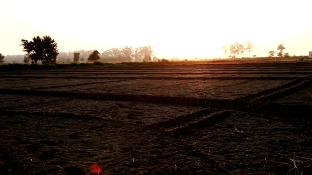 plowed field during sunset - plowed field stock videos and b-roll footage
