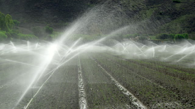 ws plowed field with sprinklers, santa rosa valley, california, usa - bewässerungsanlage stock-videos und b-roll-filmmaterial