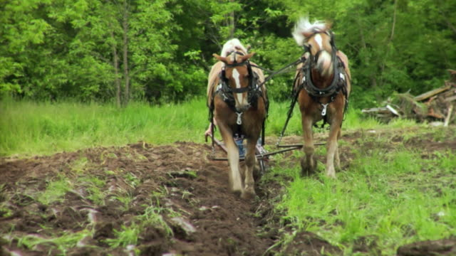 stockvideo's en b-roll-footage met ws plowing scene with farmer and two horses, neenah, wisconsin, usa - alleen één seniore man