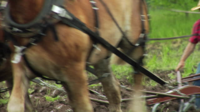 stockvideo's en b-roll-footage met cu ts plowing scene with farmer and two horses, neenah, wisconsin, usa - alleen één seniore man