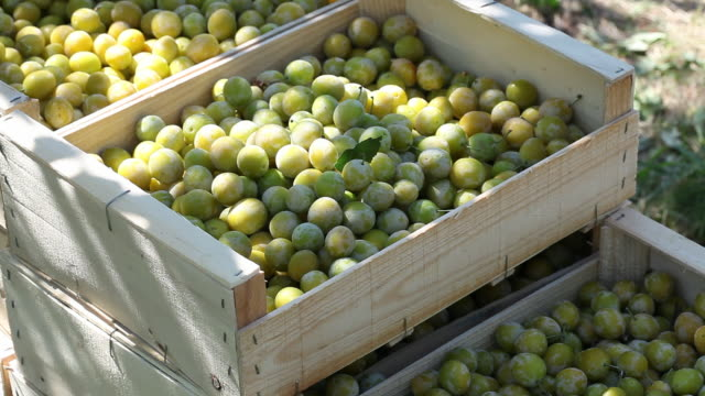 plums in wooden crates, ardeche, france - plum stock videos & royalty-free footage