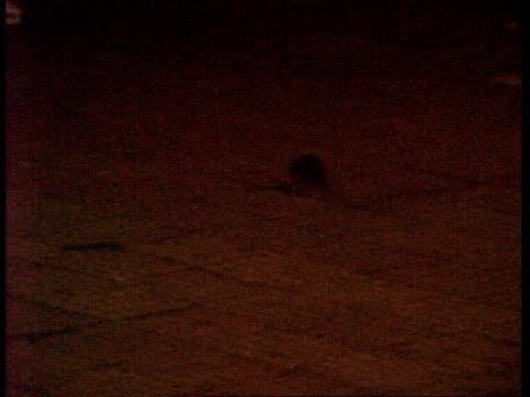 vídeos de stock, filmes e b-roll de people sleeping in street / rats india bombay people sleeping in street / rats scurrying along street past sleeping bodies / tracking shot past... - praga