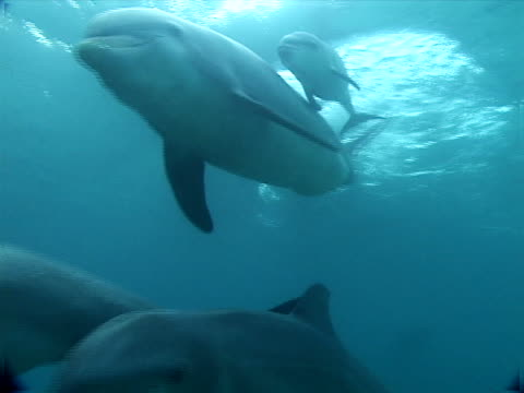 pod and diver - medium group of animals stock videos & royalty-free footage