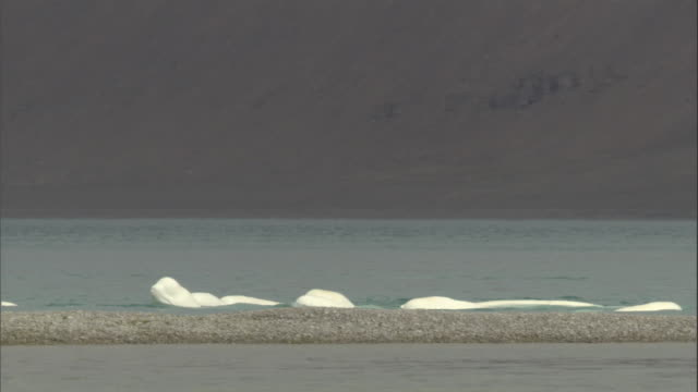a pod of beluga whales splashes in cunningham inlet. - wal stock-videos und b-roll-filmmaterial