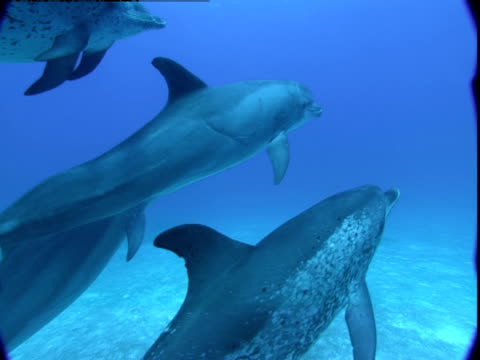 A pod of dolphins glides along a sandy seabed.