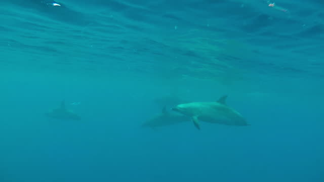 pod of dolphins passing, one is injured, underwater slow motion - common dolphin stock videos & royalty-free footage