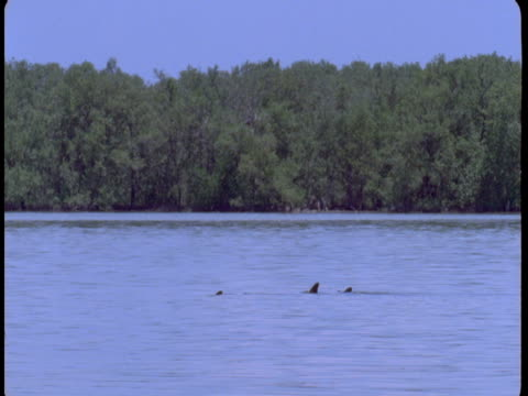 A pod of dolphins swim at the surface of the water, revealing their dorsal fins.