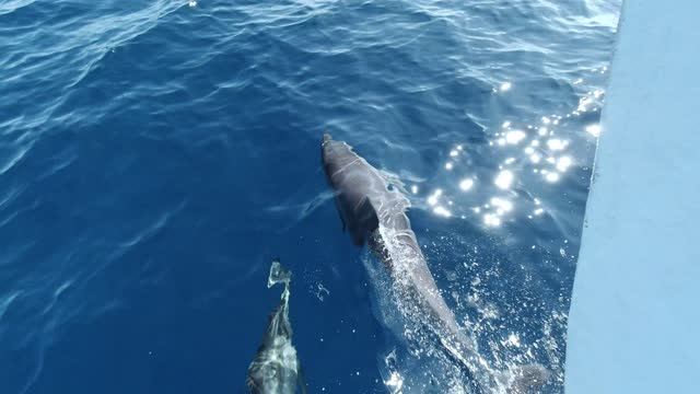 pod of dolphins swimming in ocean - dolphin stock videos & royalty-free footage