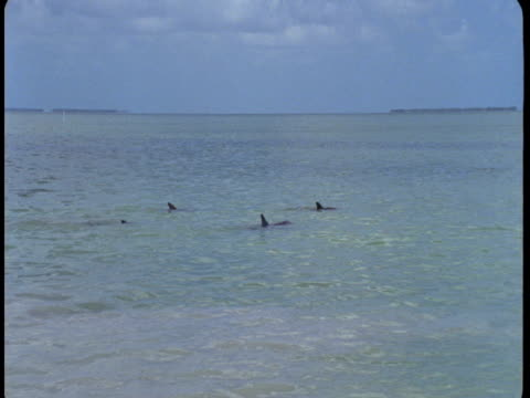 A pod of dolphins swims at the surface of the water.