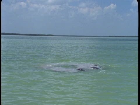 a pod of dolphins swims in shallow water. - cetacea stock videos & royalty-free footage