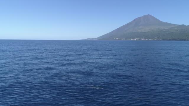 vídeos de stock e filmes b-roll de pod of dolphins travel cruising in front of pico island - bando de mamíferos marinhos
