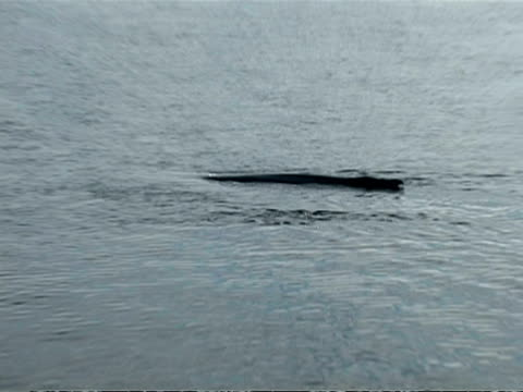 ms pod of humpback whale, megaptera novaeangliae, surfacing, antarctica - surfacing stock videos & royalty-free footage