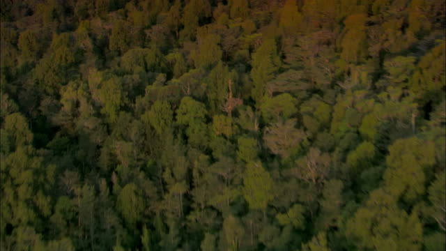 low aerial, podocarp temperate rainforest, fiordland national park, new zealand - temperate rainforest stock videos & royalty-free footage