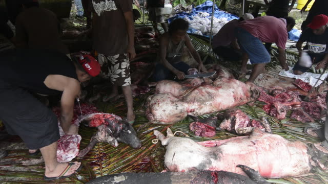 Pohnpei Micronesia men using knives to cut pig meat for celebration party on the island