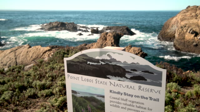 point lobos state reserve - carmel california stock videos & royalty-free footage