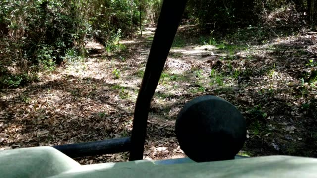 point of view, all-terrain-vehicle (atv) driving along forest trail. - quadbike stock videos & royalty-free footage
