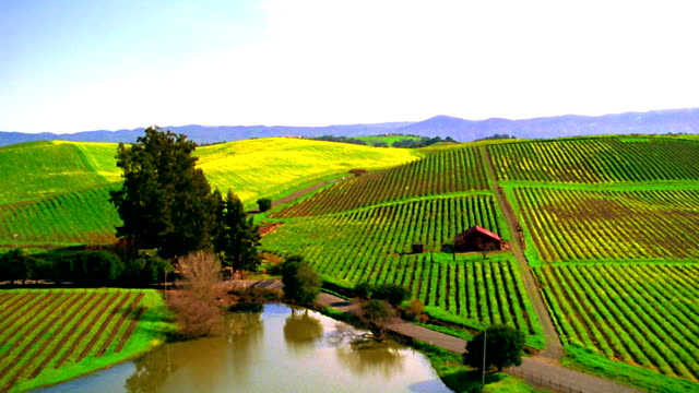 AERIAL point of view farmland with rows of crops, small ponds + hills / Napa Valley, California