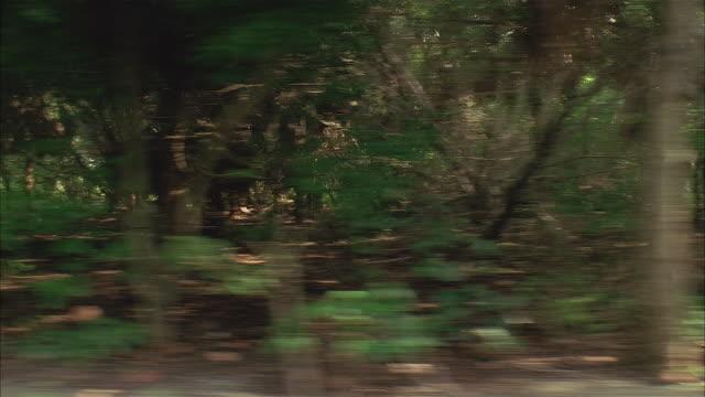 vídeos de stock, filmes e b-roll de point of view from side of car driving past woods / accelerating speed - placa de processamento móvel
