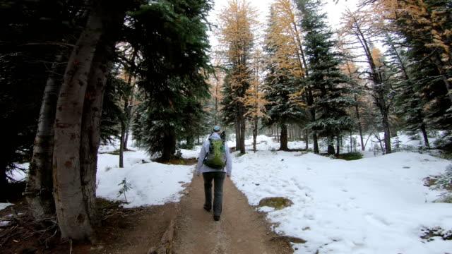 vidéos et rushes de point de vue randonnée derrière la femme, comme elle aime la fin des couleurs automnales - manteau et blouson d'hiver