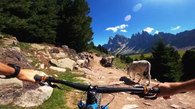 vidéos et rushes de point de vue pov vtt en plein air sur les dolomites: rencontre avec des ânes - caméra portable
