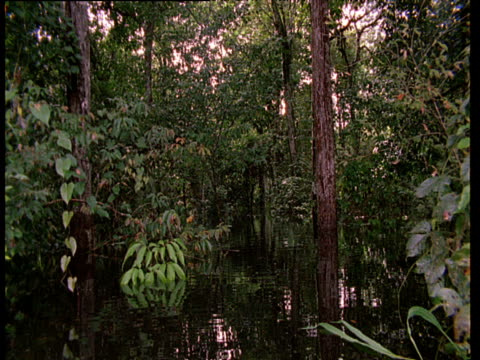 Point of view of boat tracking through Amazon flooded forest